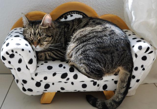 kočičí pohovka, puntíky, kočka