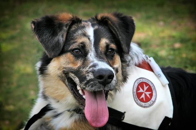 Pes – přítel v nouzi